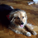O czym warto pamiętać przed adopcją psa ze schroniska?
